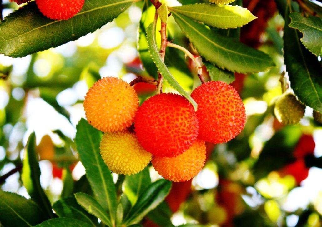 frutto arancione del corbezzolo